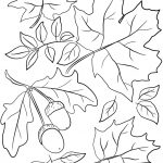 Autumn Leaves And Acorns Coloring Page | Free Printable Coloring Pages   Free Printable Pictures Of Autumn Leaves