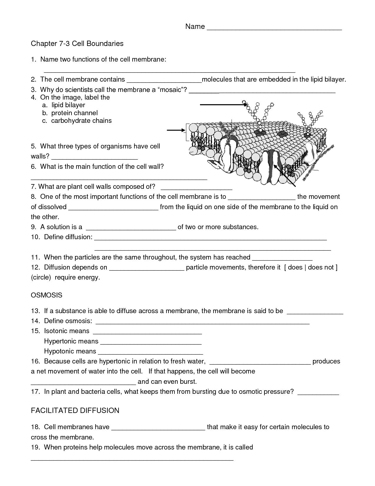 Biology Cell Worksheets | Carpe Diem Science | Science Worksheets - Free Printable High School Worksheets