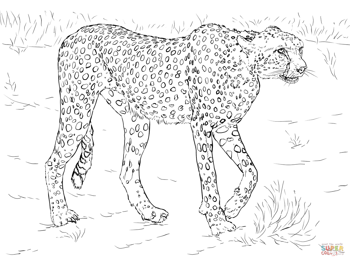 Cheetah Coloring Pages | Free Coloring Pages - Free Printable Cheetah Pictures