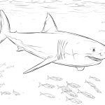 Coloring Ideas : Free Shark Coloring Pages Amazing Great White Dwcp   Free Printable Great White Shark Coloring Pages