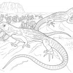Desert Animals Coloring Pages North American | Coloring Pages   Free Printable Desert Animals