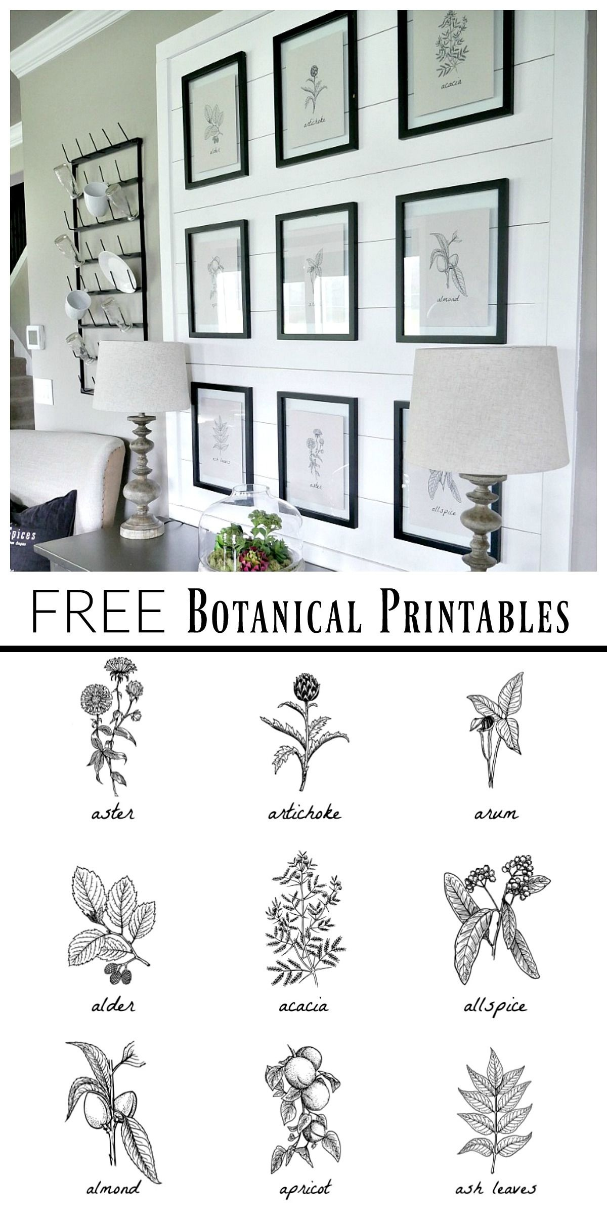 Free Botanical Prints | Bloggers' Best Diy Ideas | Diy Home Decor - Free Black And White Printable Art