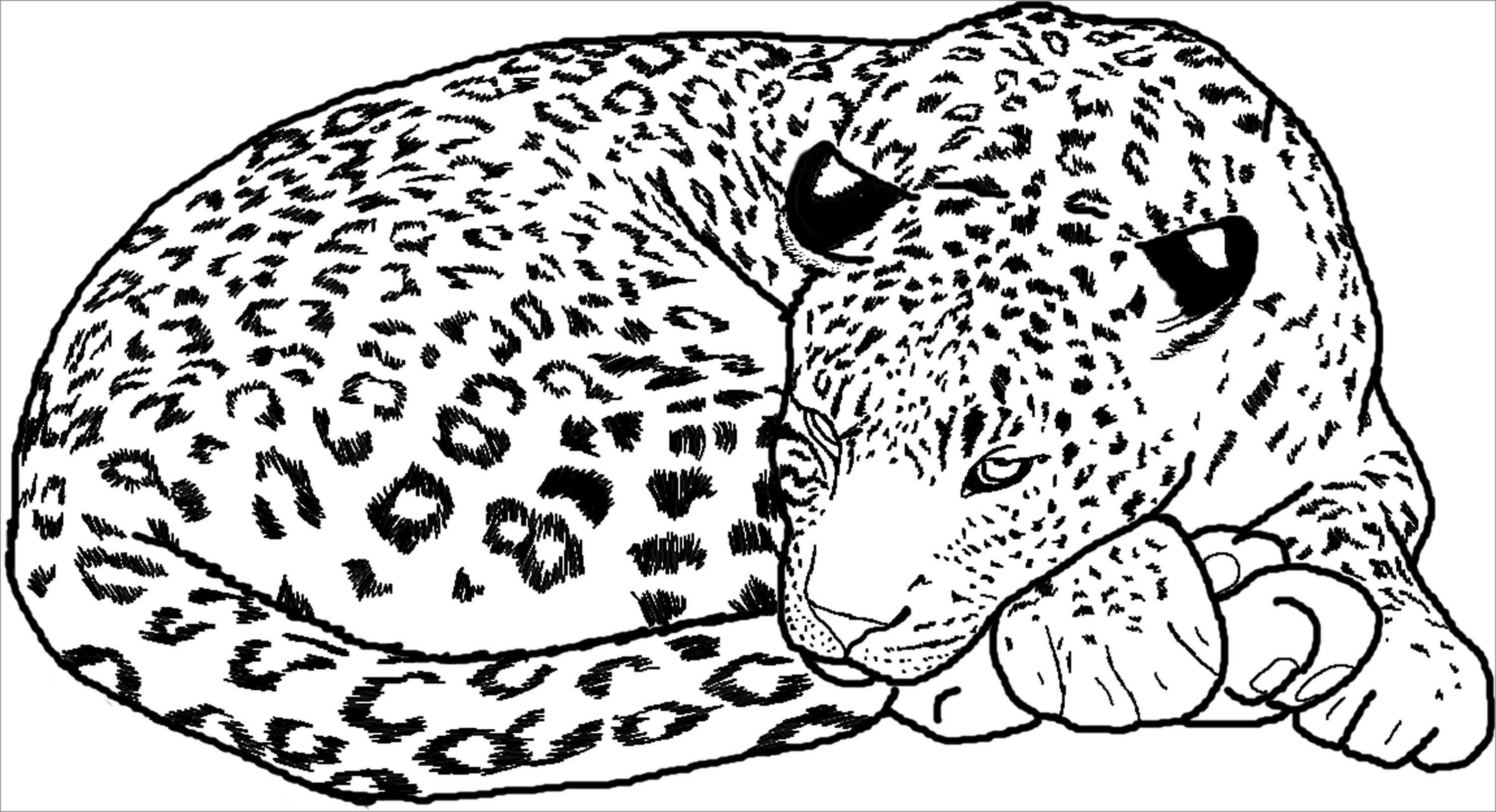 Free Printable Cheetah Coloring Pages For Kids - Coloringbay - Free Printable Cheetah Pictures