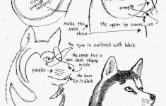 How To Draw Worksheets For The Young Artist: How To Draw A Siberian – Free Printable Drawing Worksheets