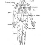 Human Skeleton Coloring Page | Free Printable Coloring Pages   Free Printable Skeleton Coloring Pages