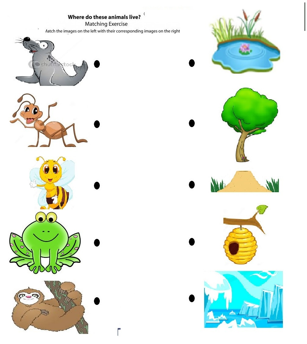 Worksheet : Free Printable Matching Animals To Their Home Habitats - Free Printable Worksheets Animal Habitats