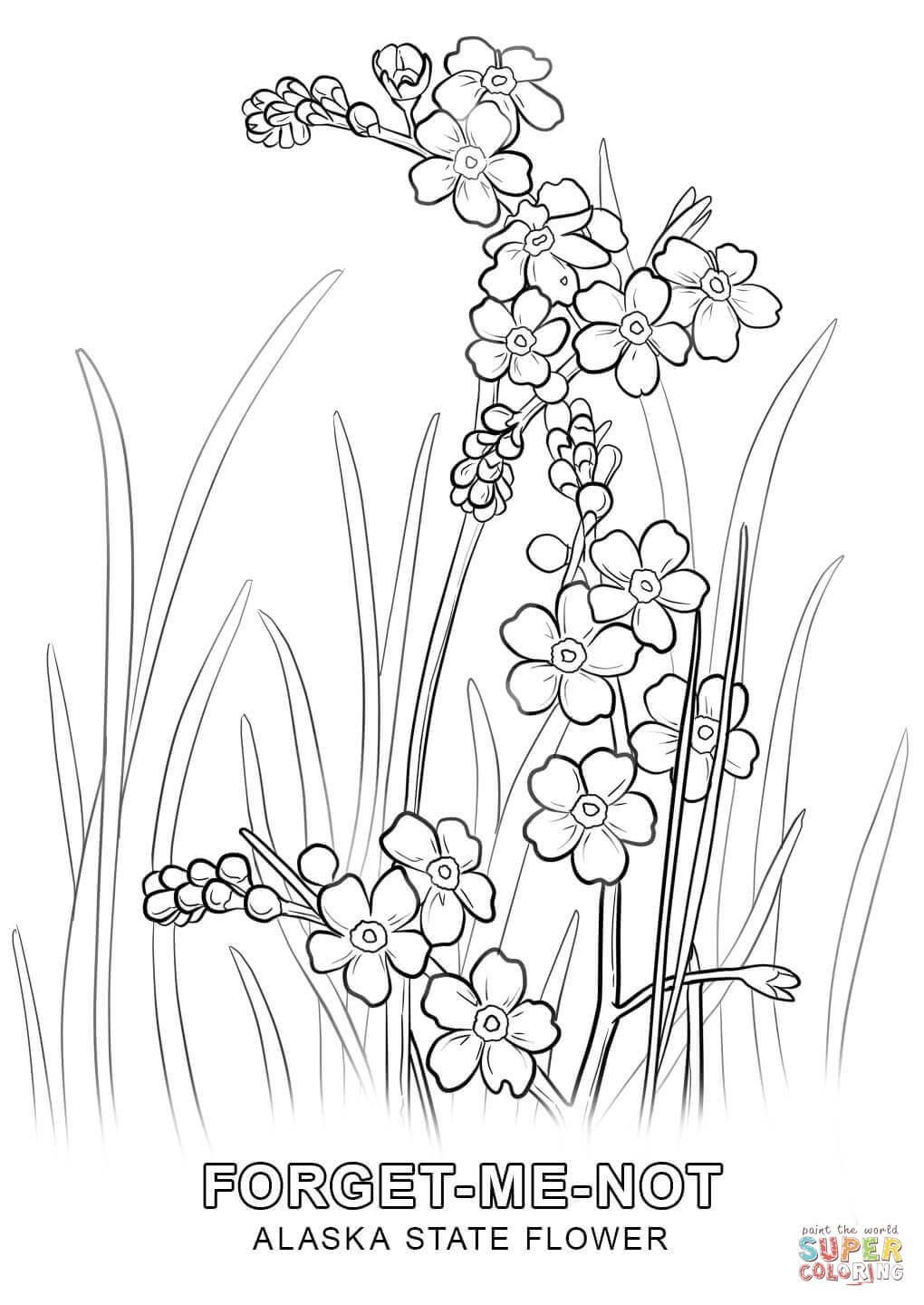 Alaska State Flower Coloring Page | Free Printable Coloring Pages - Free Printable Pictures Of Alaska