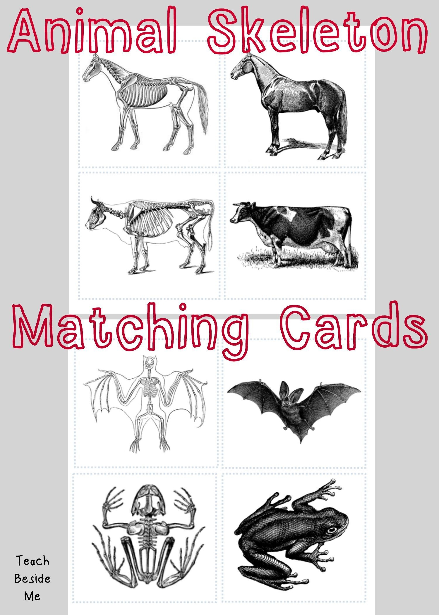 Animal Skeleton Matching Cards | Children: Nature, Science & Co - Free Printable Animal X Rays