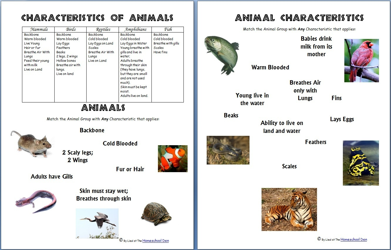 Animals And Their Characteristics (Free Worksheet) - Homeschool Den - Free Printable Animal Classification Cards