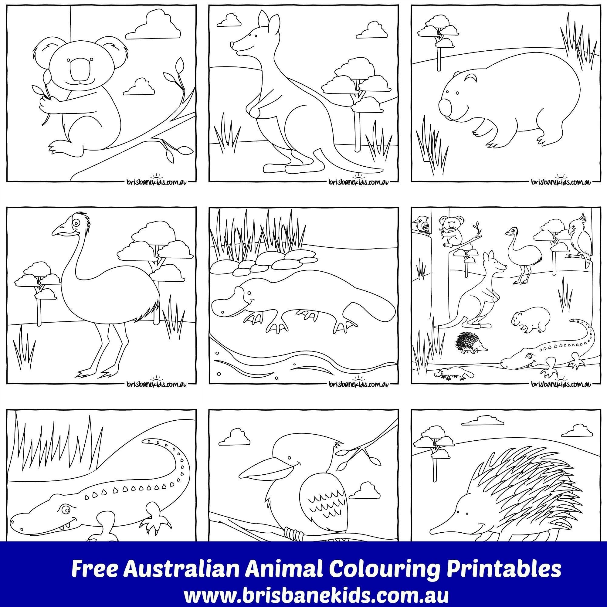 Australian Animals Colouring Pages | Australia | Australian Animals - Free Printable Australian Animals