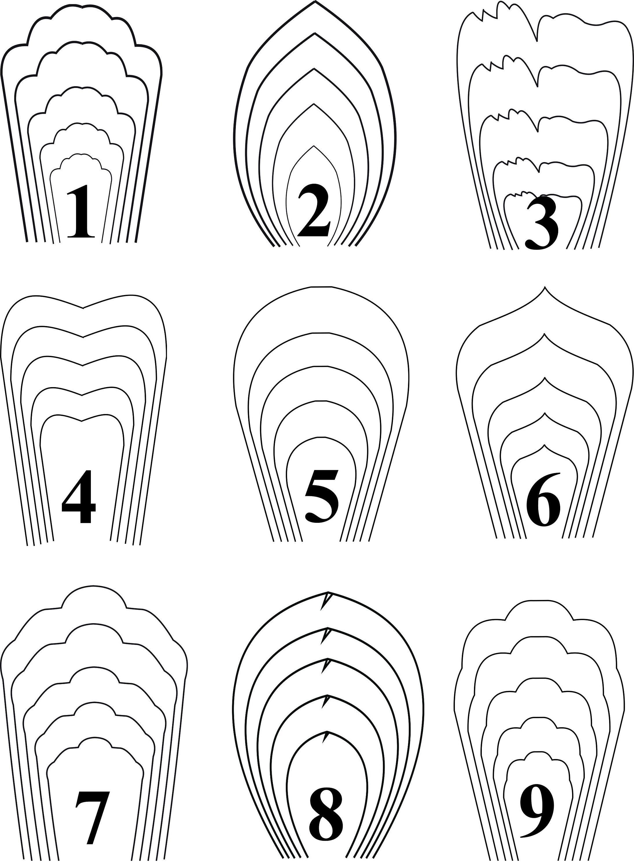 Bundle 1-All 20 Pdf & Svg Paper Flower Template Giant Paper Flower - Free Paper Flower Templates Printable