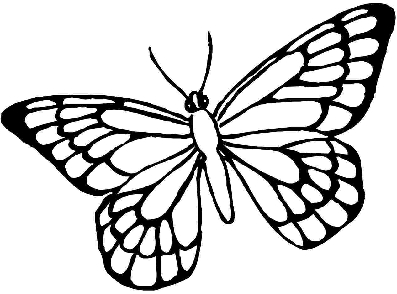 Butterfly Coloring Pages | Free Download Best Butterfly Coloring - Free Printable Butterfly Coloring Pages
