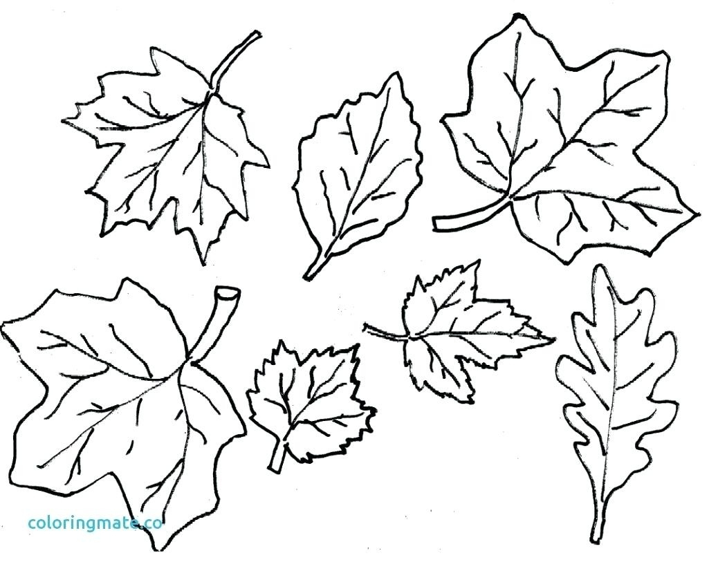 Coloring Ideas : Coloring Ideas Fallves Pages O Printable Freef - Free Printable Leaf Coloring Pages