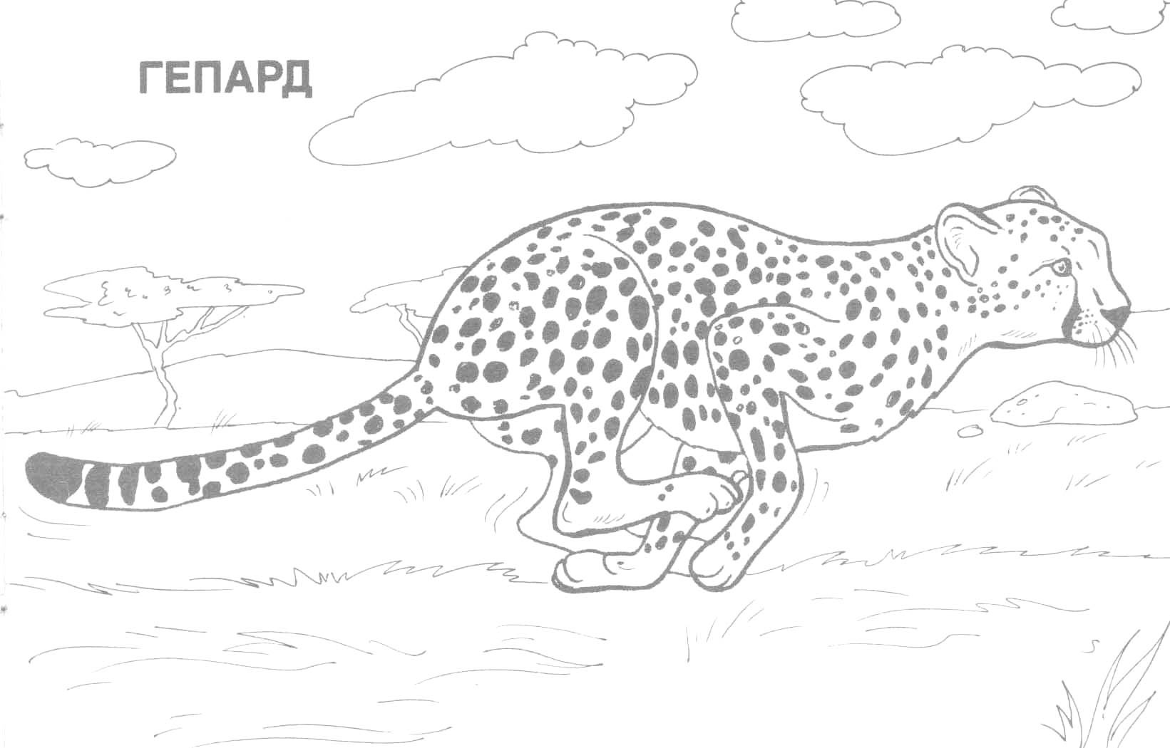 Coloring Ideas : Wild Animal Coloring Sheets Image Inspirations - Free Printable Wild Animal Coloring Pages
