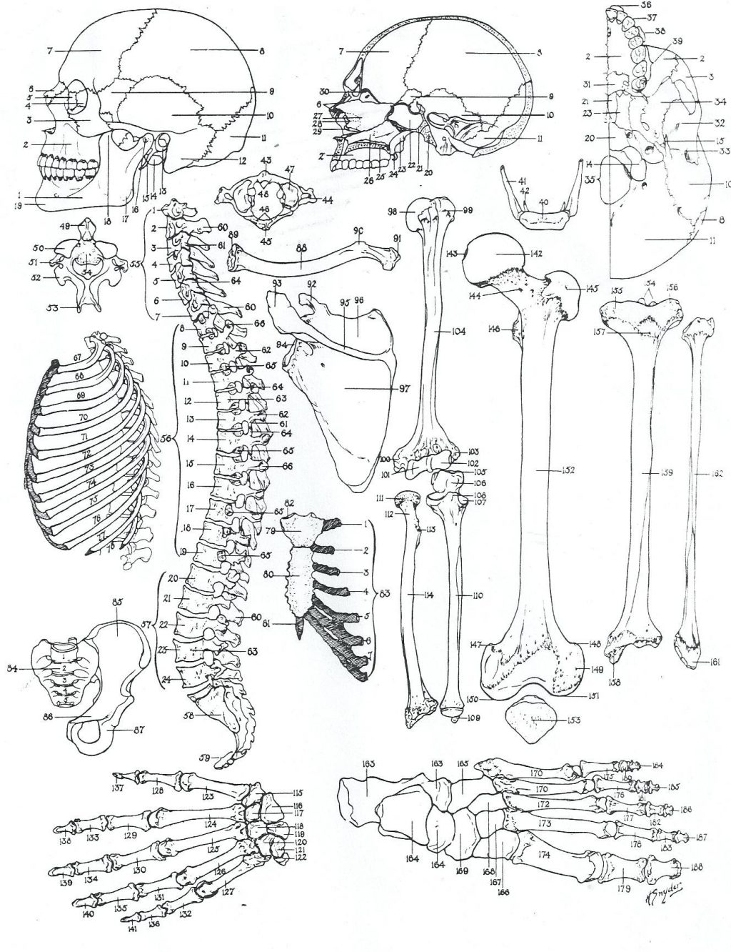 Coloring Page ~ Anatomy Coloring Pages Dechome Me And Book For Kids - Free Printable Human Anatomy Coloring Pages