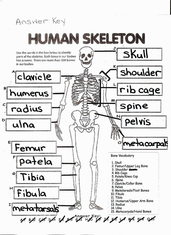 Coloring Page ~ Free Printable Human Anatomy Coloring Pages - Free Printable Anatomy Pictures