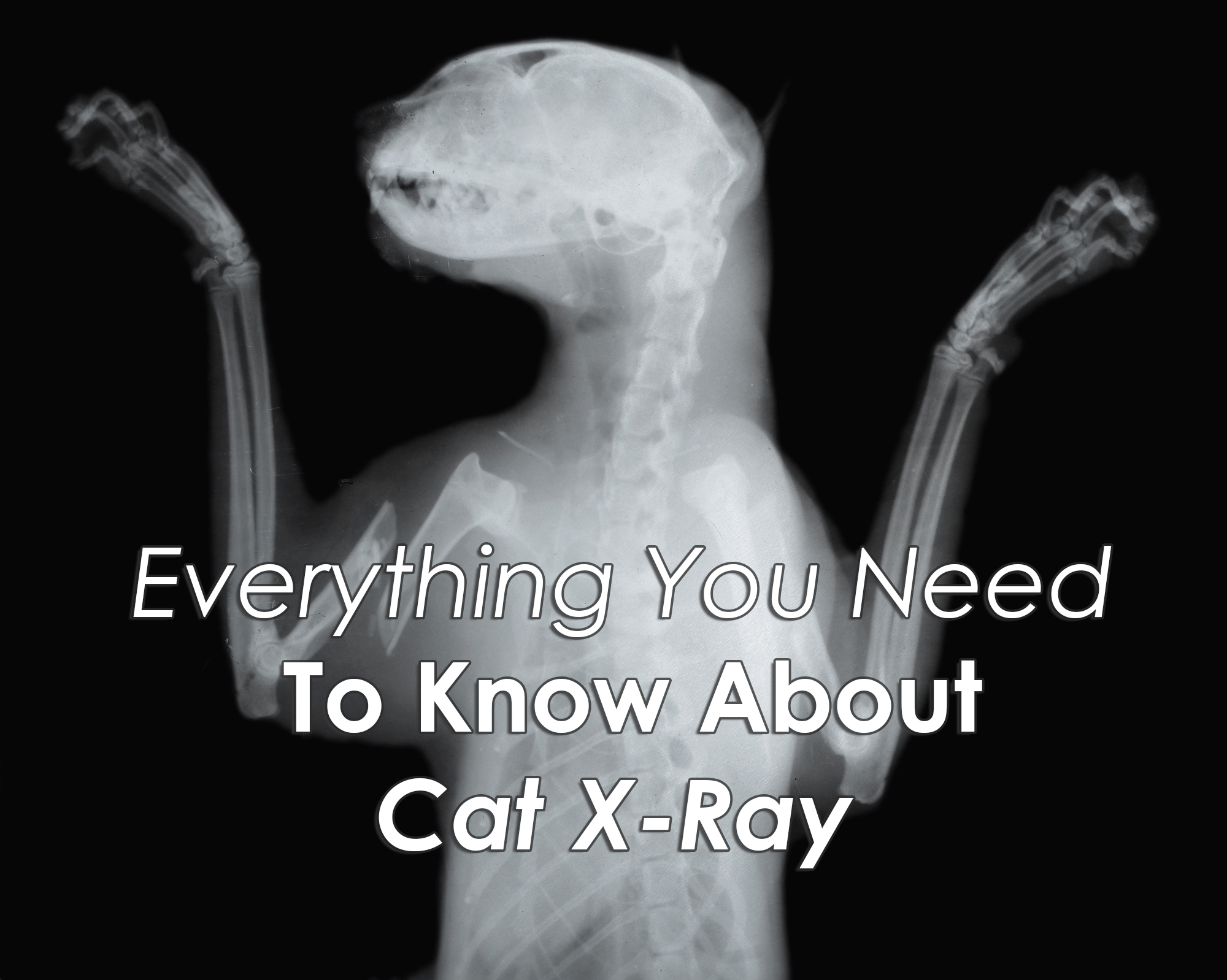 Everything You Need To Know About Cat X Ray - Free Printable Animal X Rays