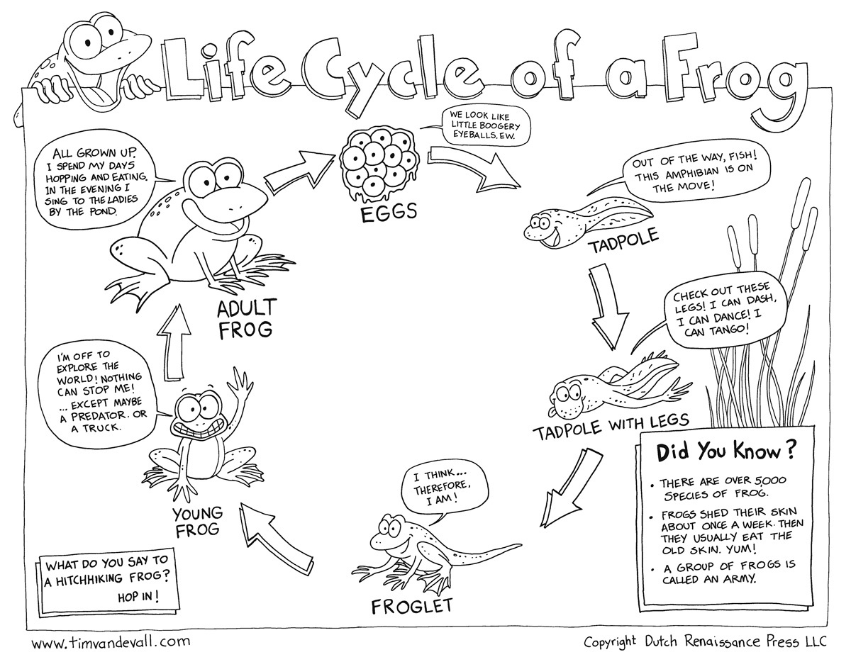 Free Life Cycle Of A Frog Printable - Life Cycle Of A Frog Free Printable Book