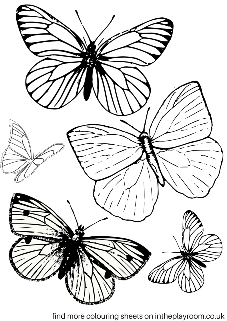 Free Printable Butterfly Colouring Pages | Bible Class | Butterfly - Free Printable Butterfly Coloring Pages