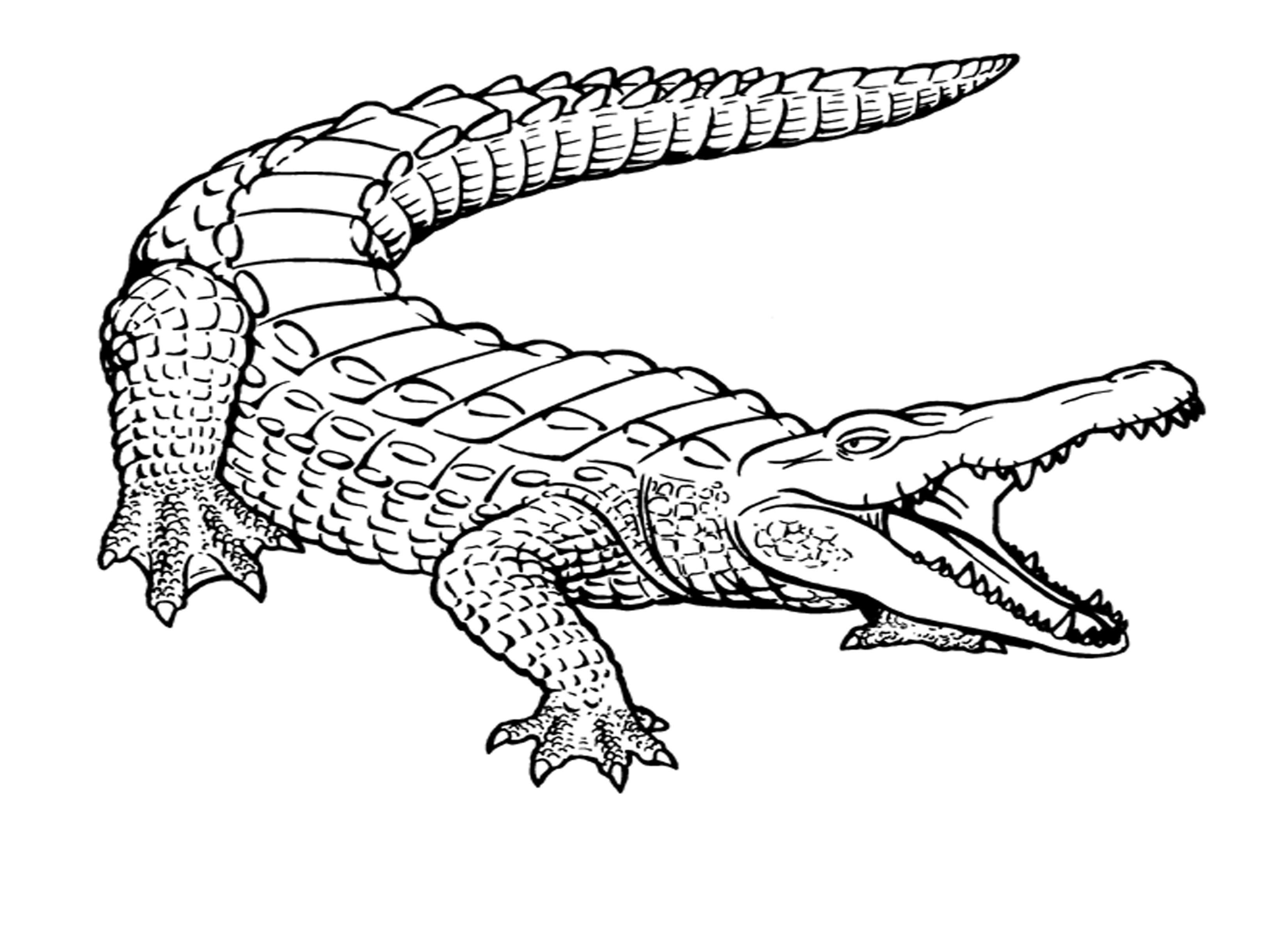 Free Printable Crocodile Coloring Pages For Kids | Ms | Coloring - Free Printable Pictures Of Crocodiles