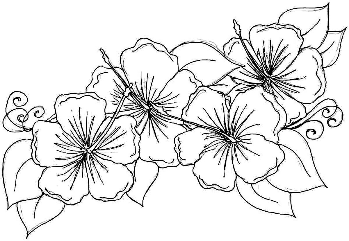 Free Printable Flowers To Color | Presidencycollegekolkata - Free Printable Flower Coloring Pages For Adults
