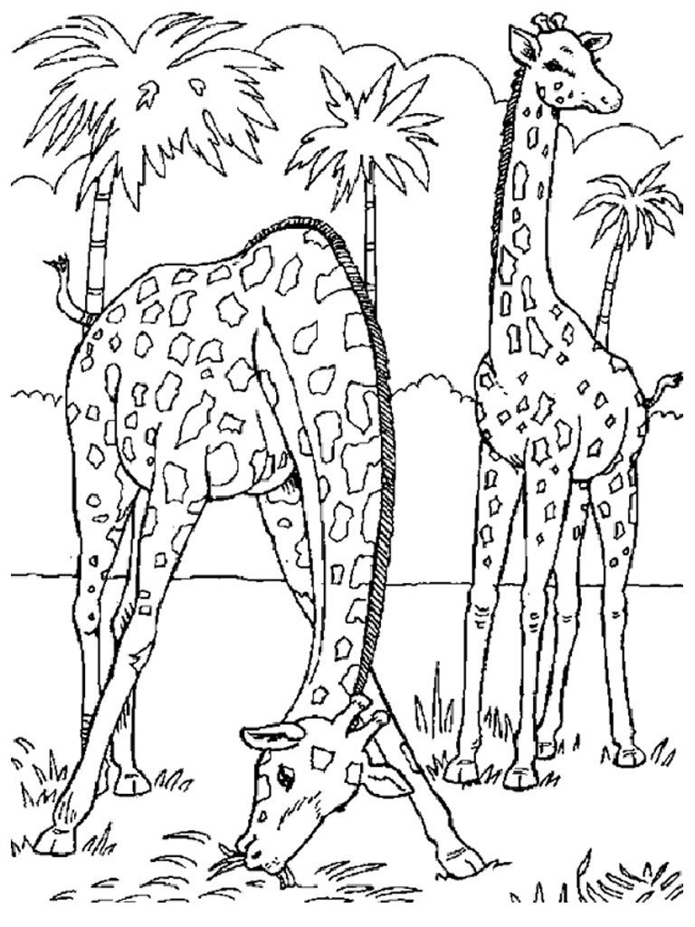 Free Printable Giraffe Coloring Pages For Kids | Coloring | Giraffe - Free Printable Wild Animal Coloring Pages