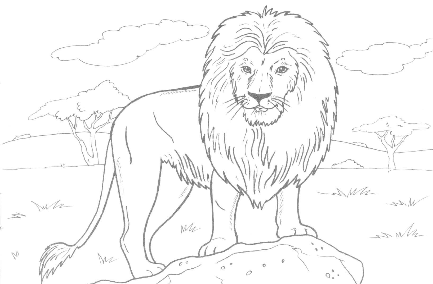 Free Printable Lion Coloring Pages For Kids - Free Printable Picture Of A Lion