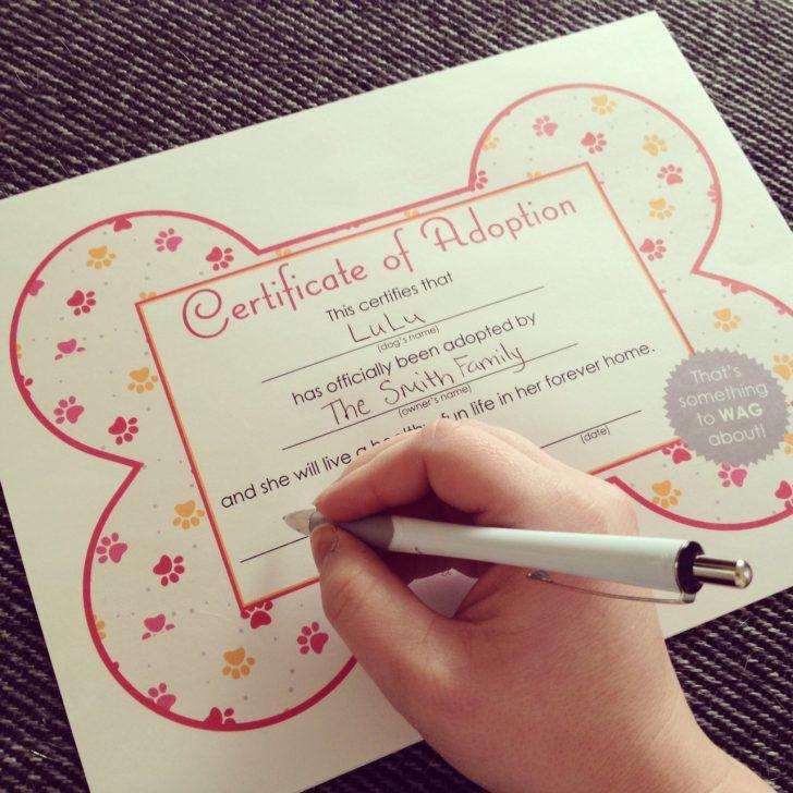 Free Printable Stuffed Animal Adoption Certificate