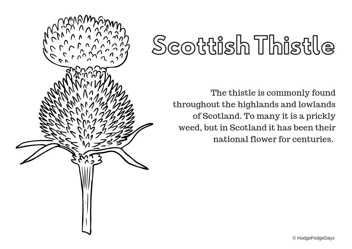 Free Printables: Learning About Scotland - Hodgepodgedays - Free Printable Scottish Flag