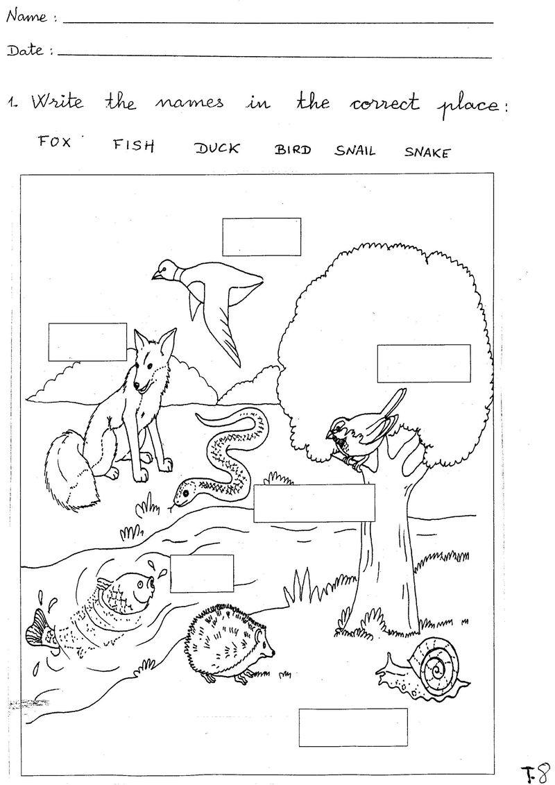 Free Science Worksheets Animal - Printable Worksheet - Free Printable Science Worksheets