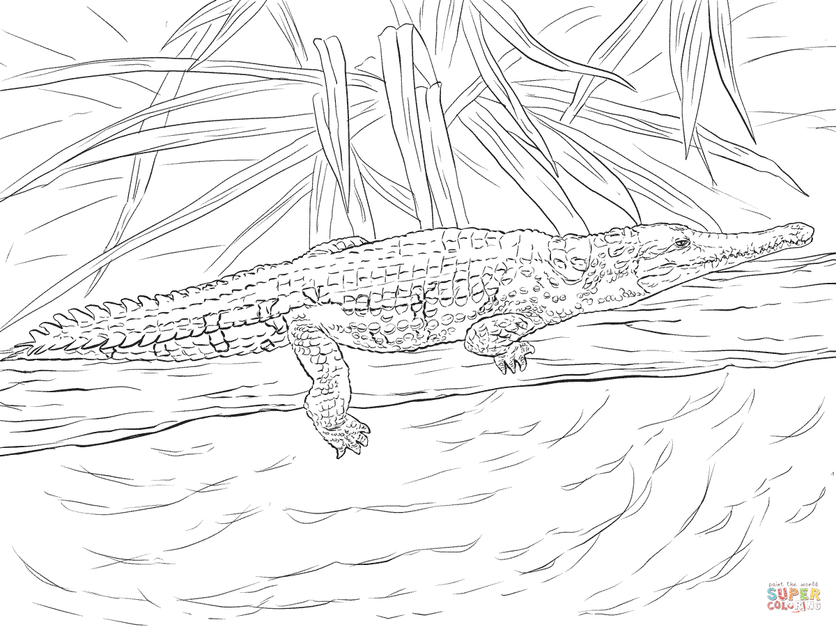 Freshwater Crocodile Coloring Page | Free Printable Coloring Pages - Free Printable Pictures Of Crocodiles
