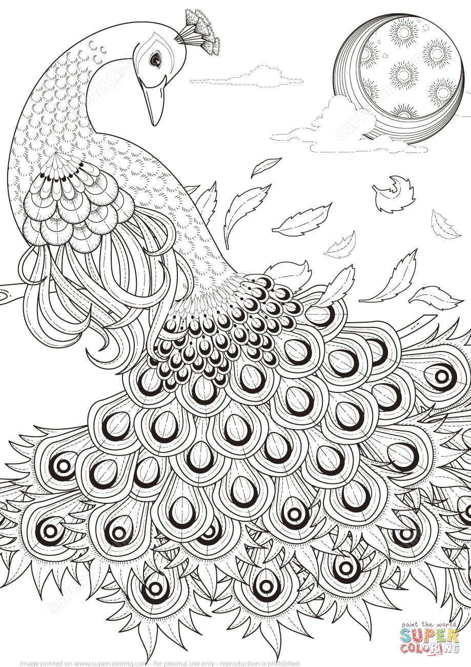 Graceful Peacock Coloring Page | Free Printable Coloring Pages - Free Printable Peacock Pictures