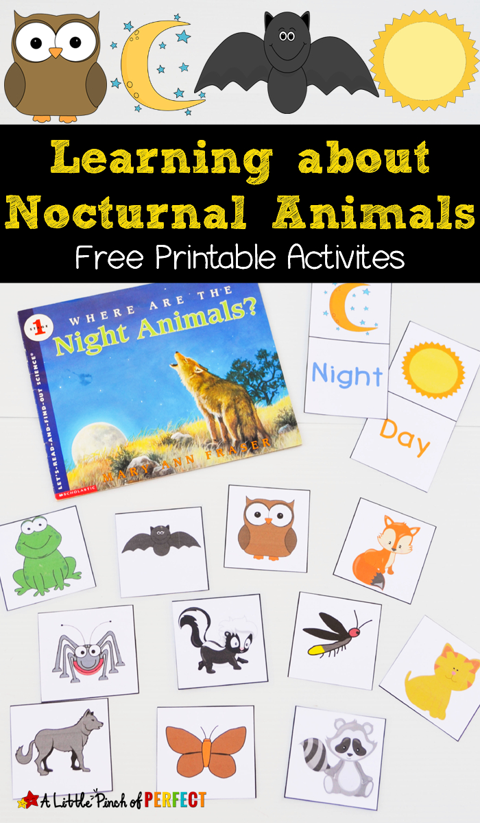 Learning About Nocturnal Animals Free Printable Activities - - Free Printable Animal Classification Cards
