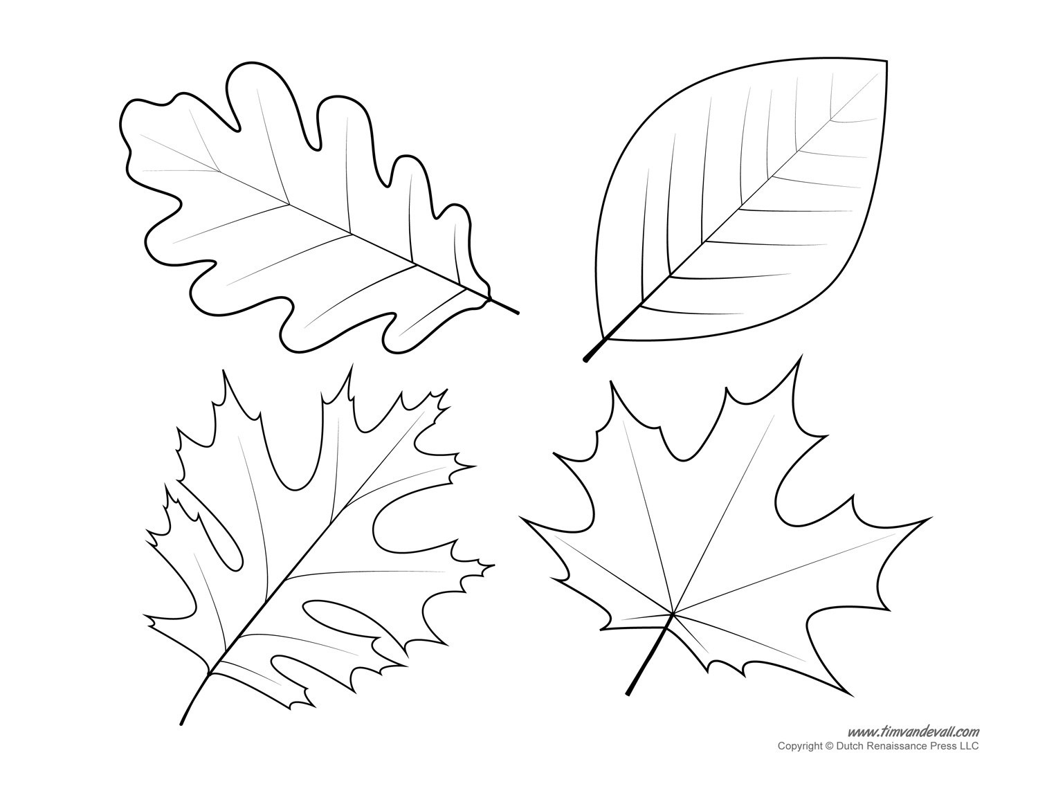 Oak Leaf Drawing Template At Paintingvalley | Explore Collection - Free Printable Oak Leaf Patterns
