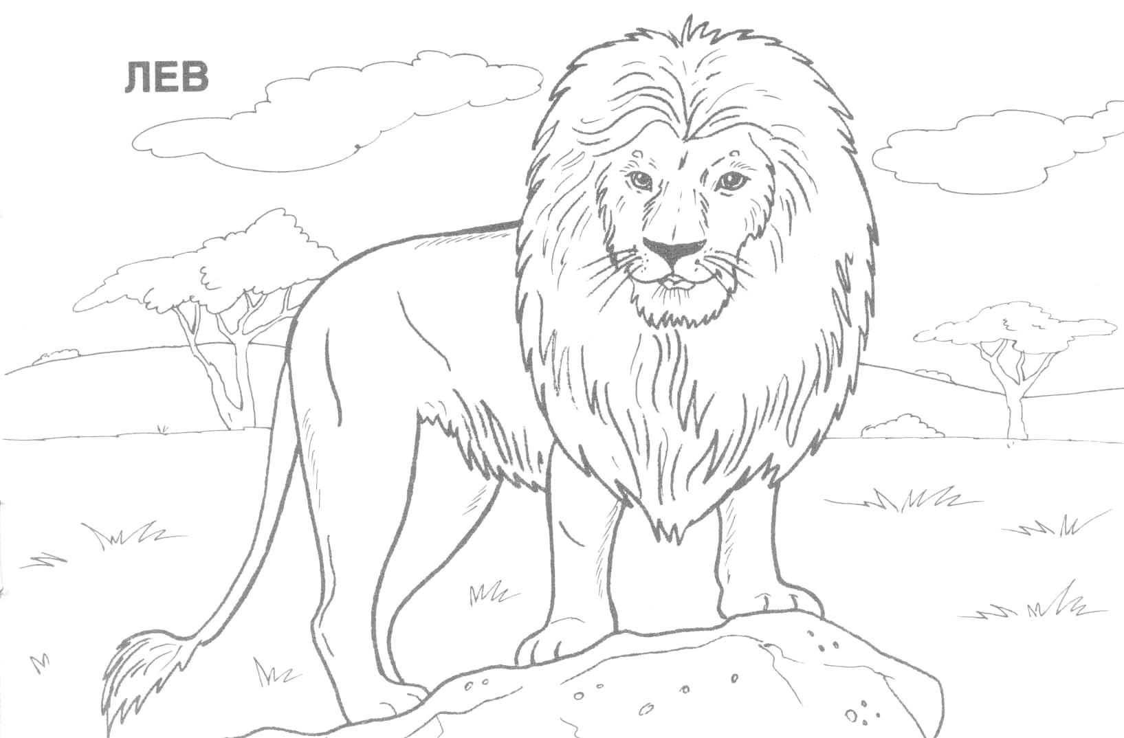 Pinjulia On Colorings | Blanco Y Negro, Dibujos A Lápiz - Free Printable Wild Animal Coloring Pages