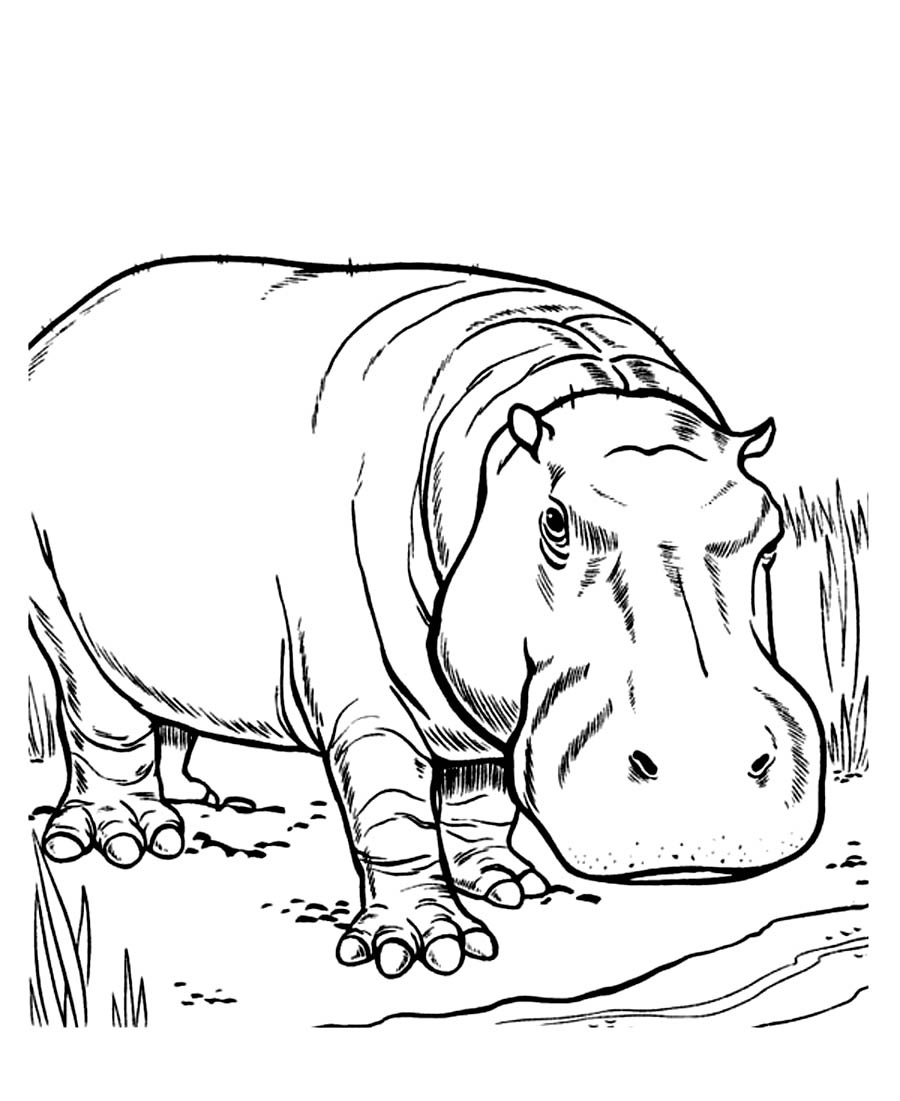 Free Hippo Coloring Pages - Free Printable Hippo Coloring ...