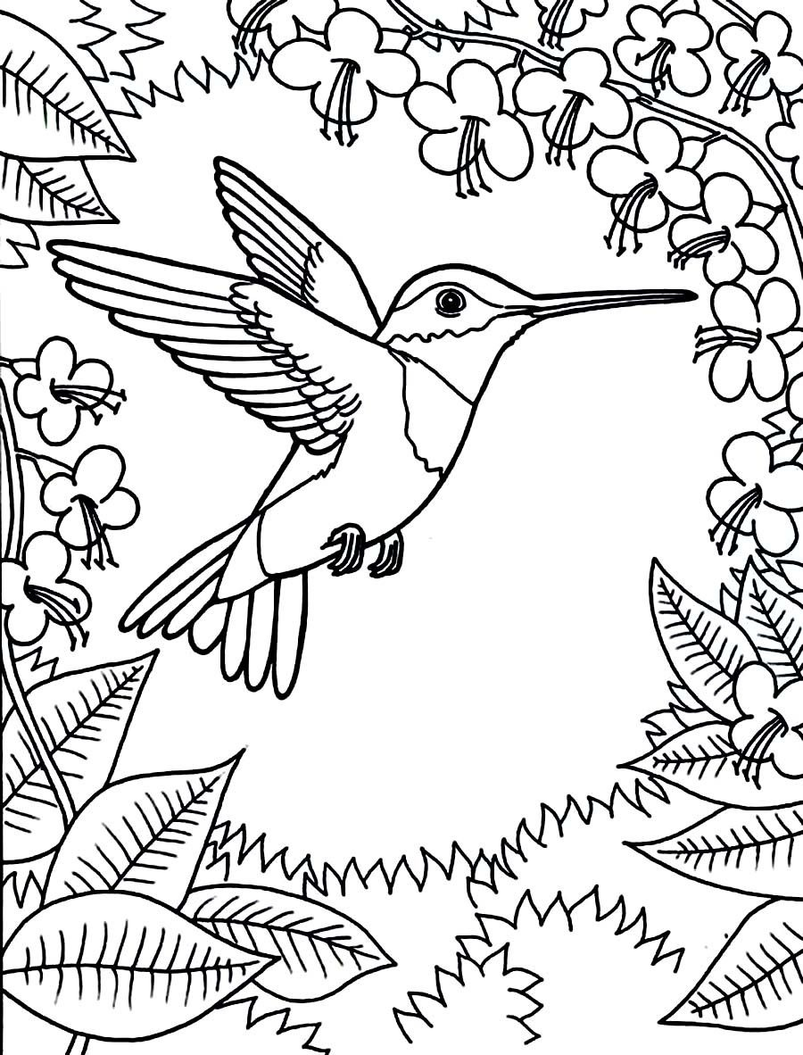 Printable Hummingbird Coloring Pages | Coloring: Animal Kingdom - Free Printable Pictures Of Hummingbirds