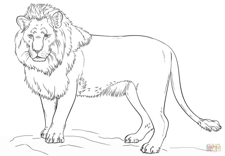 Free Printable Picture Of A Lion