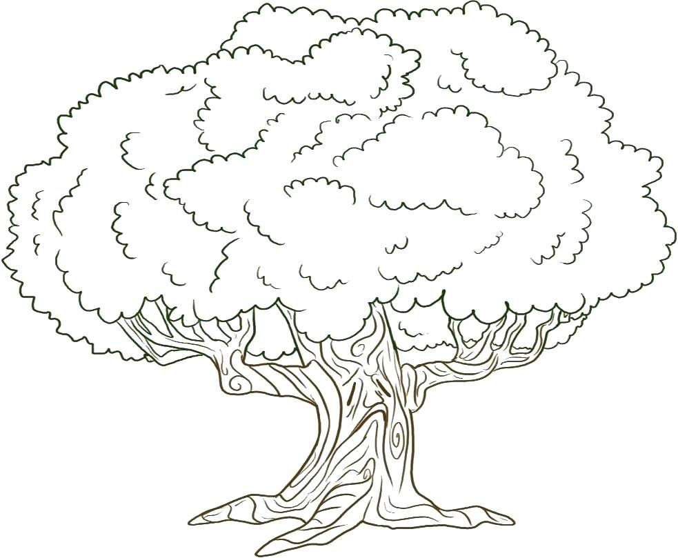 Trees Coloring Page Adult Coloring Pages Tree Lorax Trees Coloring - Tree Coloring Pages Free Printable