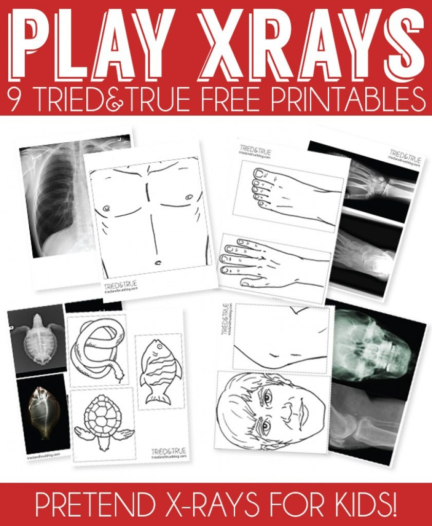 X Ray Drawing Kindergarten At Paintingvalley | Explore - Free Printable Animal X Rays